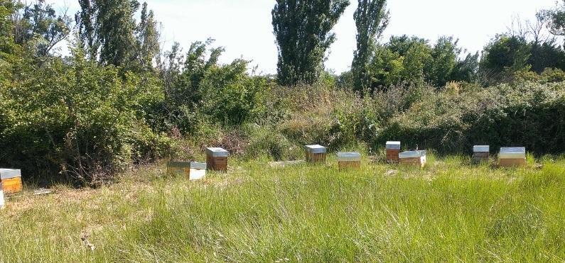 Mellidor apiculteur récoltant